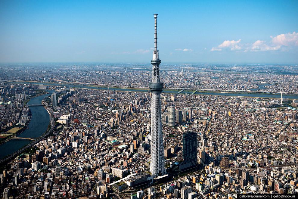 34. На башне Tokyo Skytree устроены две смотровые площадки на отметках 350 и 450 метров.