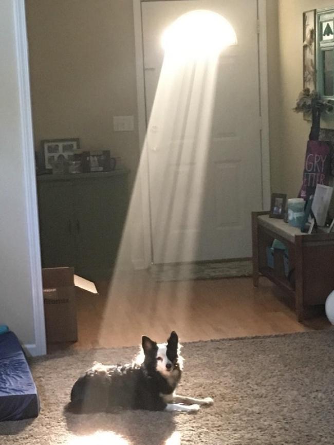 © Theyallknowme/reddit      Они очень ценят наши подарки. Этот пес, например, нев
