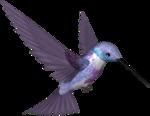 Lacarolita_My Fantasy Bird2.png