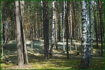 http://img-fotki.yandex.ru/get/37849/15842935.373/0_ea0ec_bb2b83d_orig.jpg