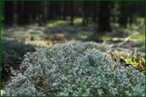 http://img-fotki.yandex.ru/get/37849/15842935.373/0_ea0fe_5a171a68_orig.jpg