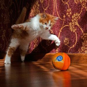 Сейчас я тебя поймаю !!!