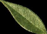 Microferk_MerryMerry-leaf2.png