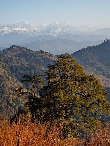 Любуясь Гималаями.