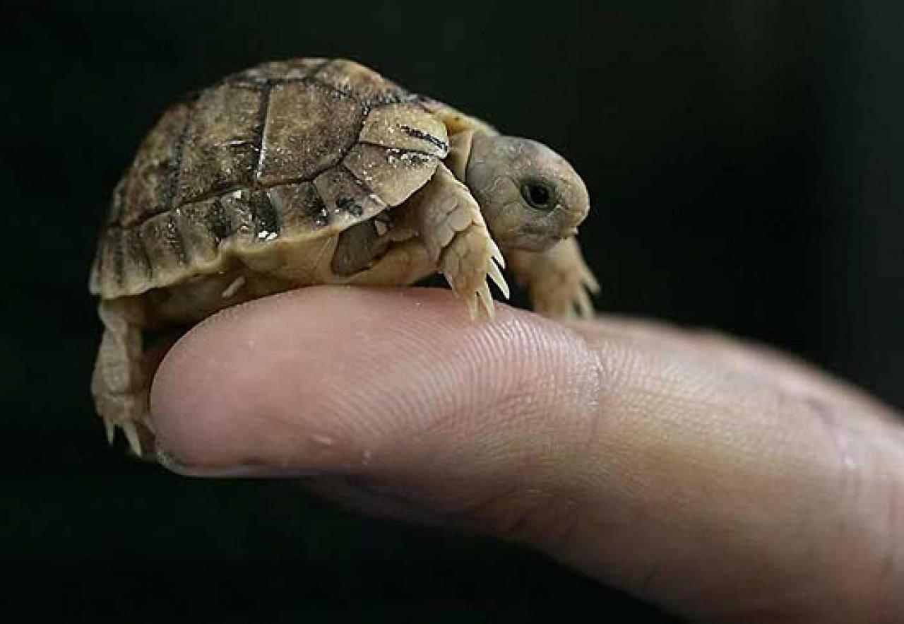 Маленька черепашка