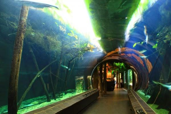 6. Тиргартен Шенбрунн Находится этот зоопарк в Австрии и является одним из самых старых и самых изве