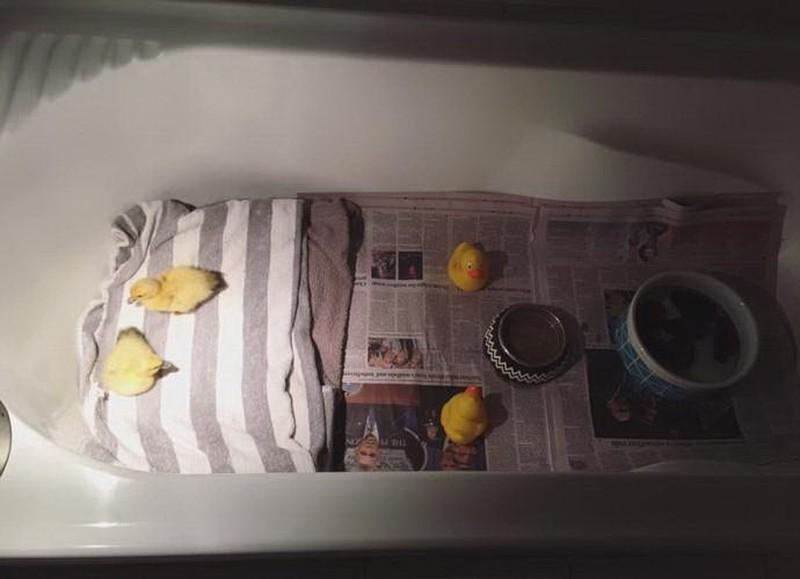 А вот и разгадка! Тут обустроено уютное гнездышко для Пингвина и Попинджея.