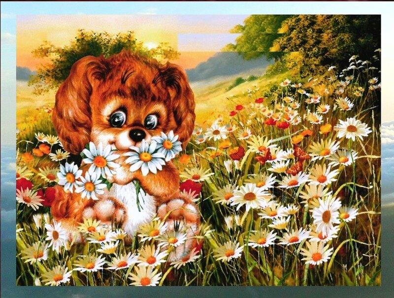 Цветы, Природа, тёплый летний вечер.jpg