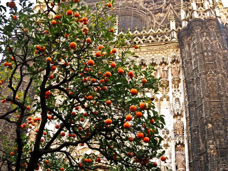Апельсиновый рай. Севилья.