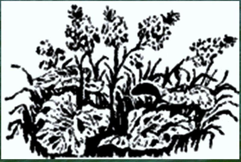 Иллюстрация к книге В.К.Арсеньева Дерсу Узала (11).jpg
