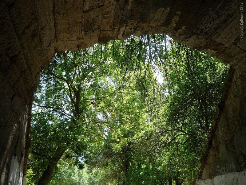 Вид из тоннеля на деревья в Ушаковой балке