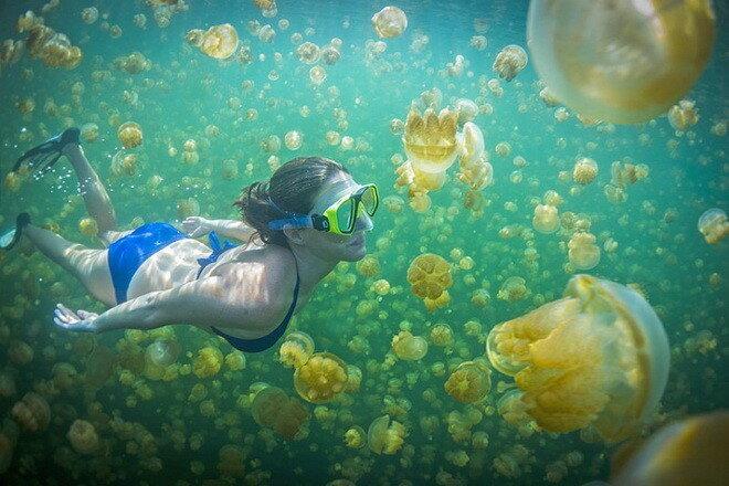 Озеро Медуз. Республика Палау