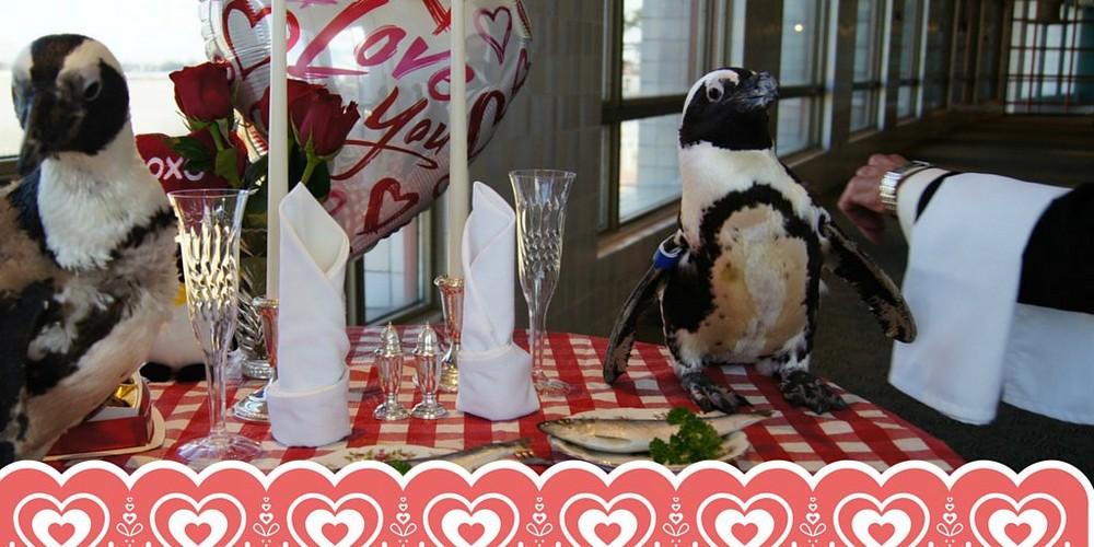 Пингвины Коль и Зелда отпраздновали 22-ой совместный День Святого Валентина в ресторане