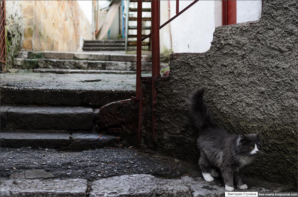 гуррзуфские котики
