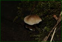 http://img-fotki.yandex.ru/get/37861/15842935.247/0_deb00_e0545d3a_orig.png
