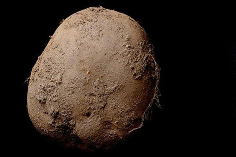 Богач купил фотографию картошки за миллион долларов