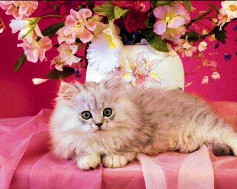 Открытки коты с цветами
