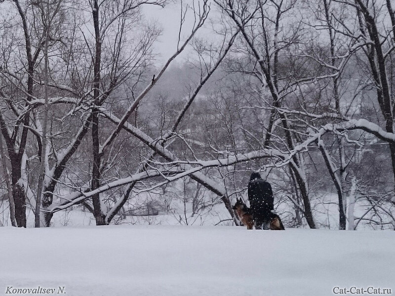 Зимняя прогулка с овчаркой