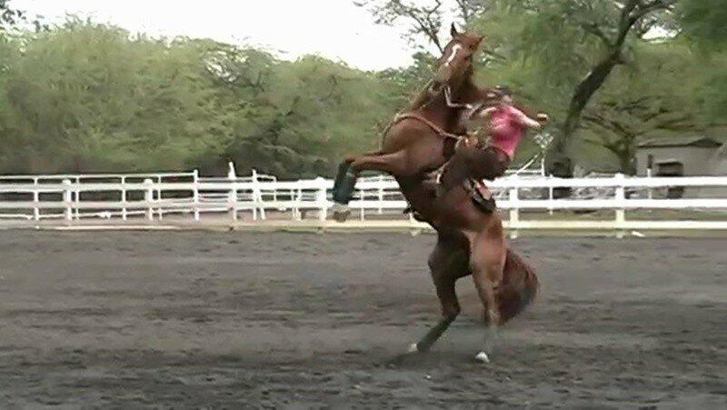 Видео. Девушка удержалась на очень резвой лошади