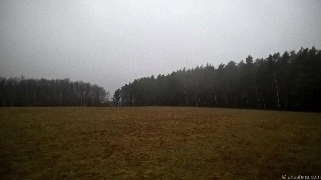 Туман над лесом