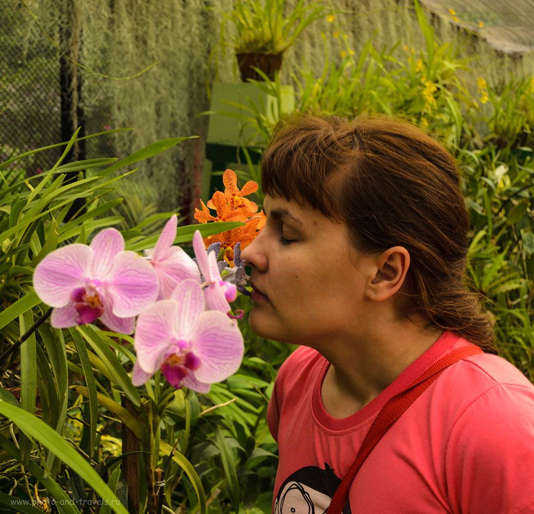 18. Оранжерея с орхидеями в ботаническом саду The Royal Botanic Gardens Peradeniya в Шри-Ланке. Отзывы туристов об экскурсии.