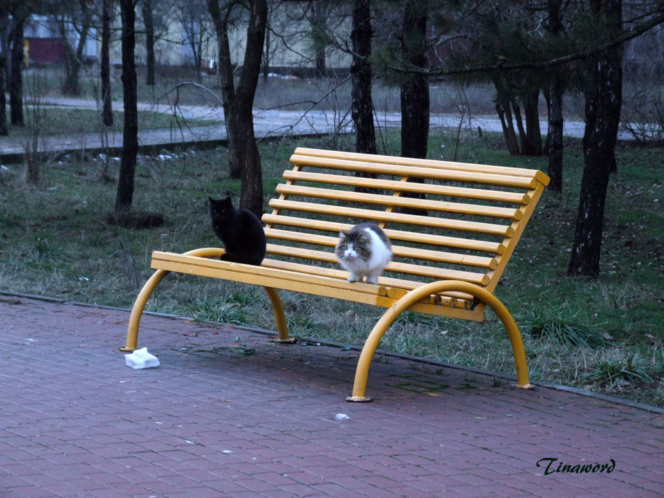 коты-9.jpg