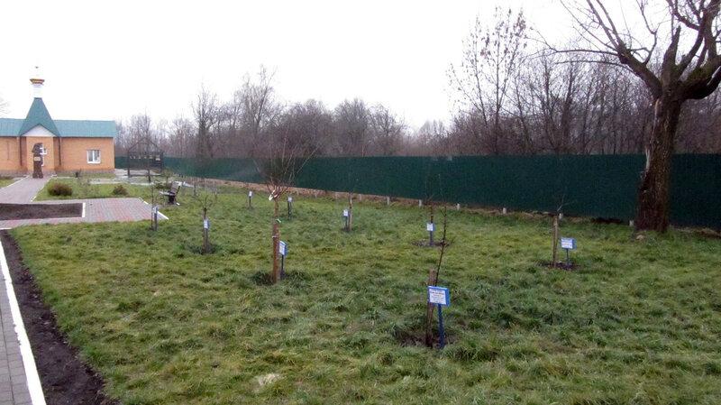 Деревья, посаженные на родине Силуана Афонского