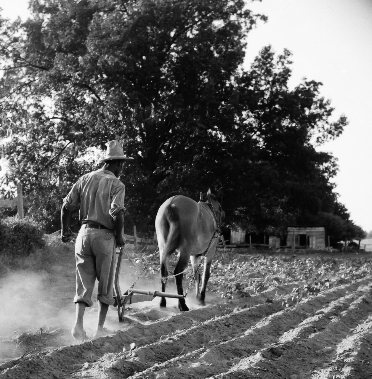 1936. Деревенский парень в Алабаме зарабатывает в день 75 центов
