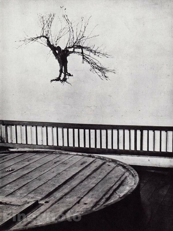 1955. Лоза в винном погребе