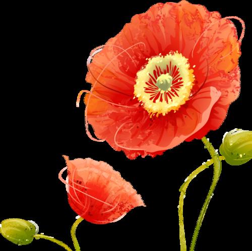 картинки цветов тюльпан ромашка василек гвоздика подсолнух полумахровые, крупные волнистые
