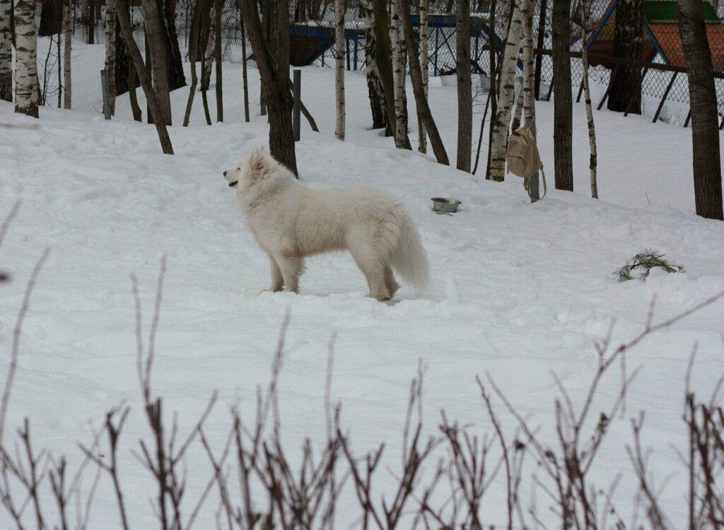 Собачья площадка в Ясенево