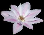 «Magic of Flowers» 0_7c4a5_2090ad37_S