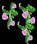 «Magic of Flowers» 0_7c4ab_93d52b5c_S