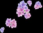 «Magic of Flowers» 0_7c4ae_8a1cdff6_S