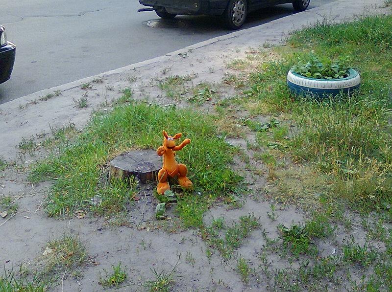 одинокий кенгуру