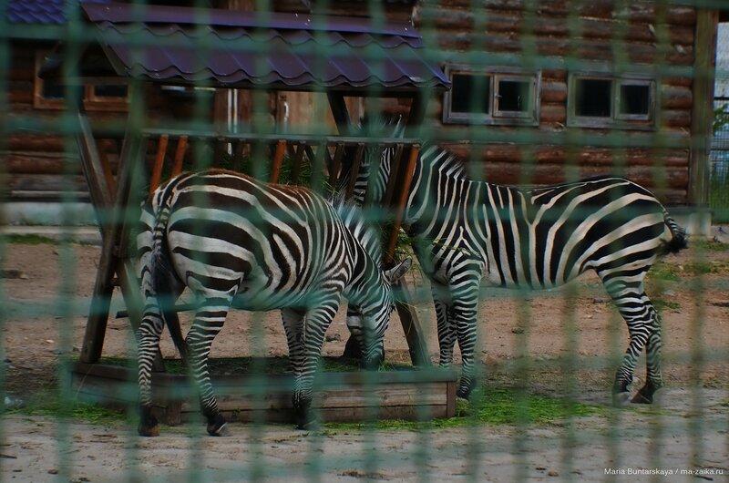 В зоопарке, Ярославль, 12 июня 2015 года