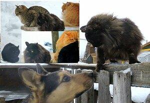 Кошляндия и соседский кот БЕГЕМОТ Солнышко против чужого кота Бегемота.