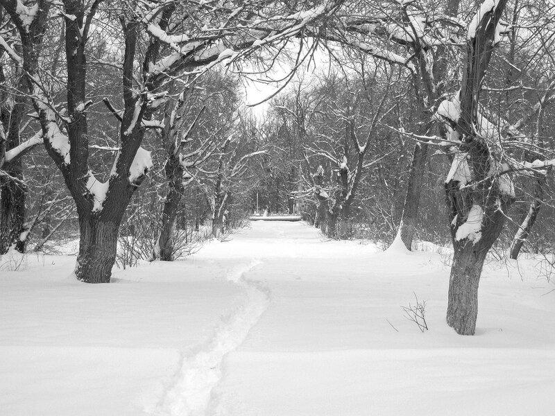 Один зимний день