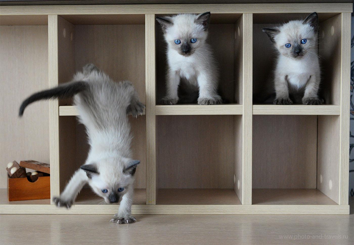 Фотография 21. Как фотографировать котят в домашних условиях (камера Nikon D610, настройки: диафрагма 5.6, выдержка 1/400 секунды, ИСО 3200, ФР=48 мм). Пример фото в формате камерного JPEG.