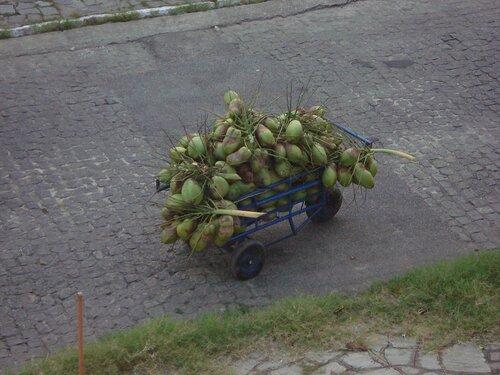 Урожай кокосов