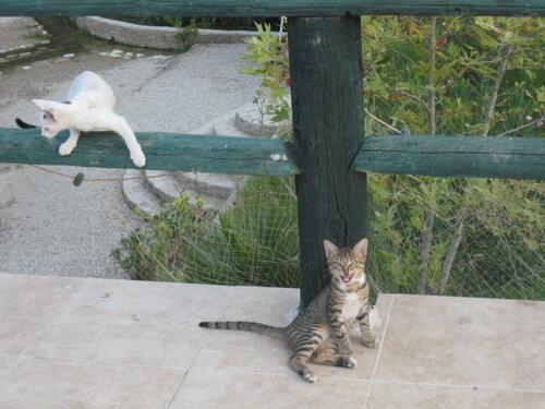 irina-t — «Подааайте... котам на пропитание...» на Яндекс.Фотках