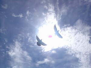Небо, солнце, голуби...