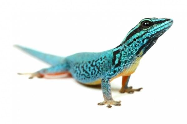 Красивый проект о рептилиях (14 фото)