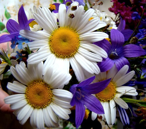 Яндекс-фото цветы