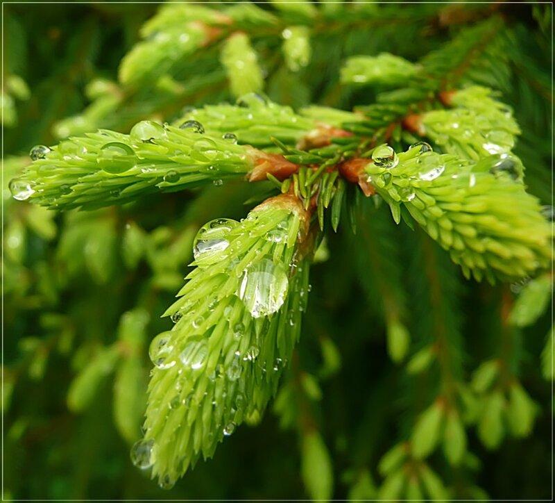 Капли дождя на молодой зелени