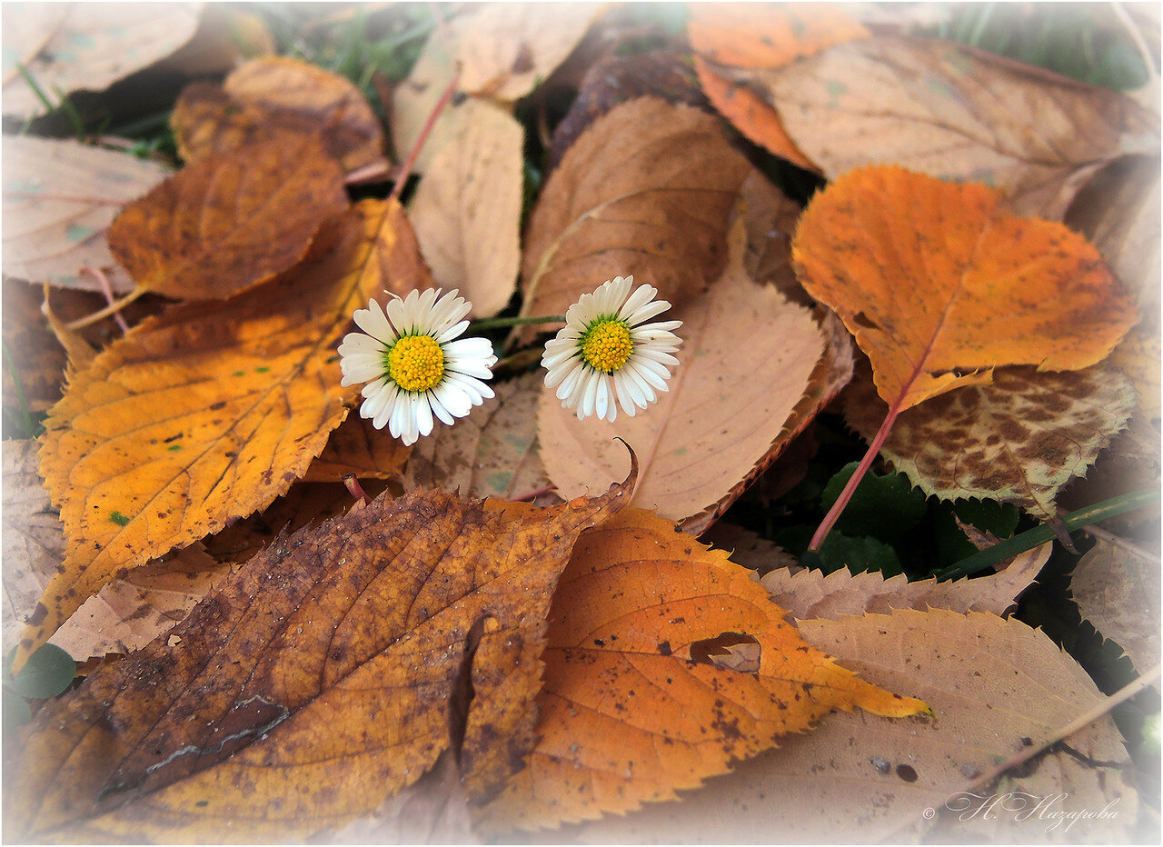 Осень строит глазки...