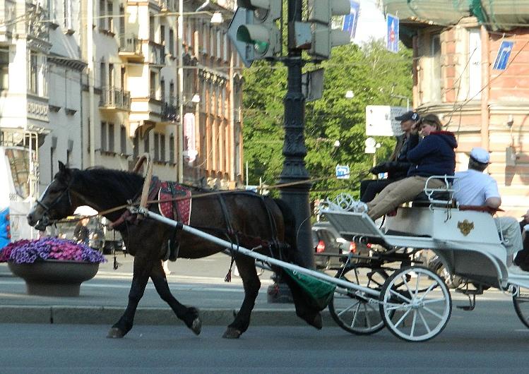 Лошадь на КАменноостровском
