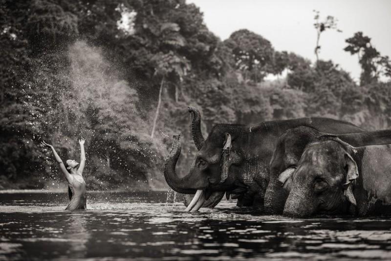 Удивительные портреты азиатских моделей и знаменитостей с дикими животными (16 фото)