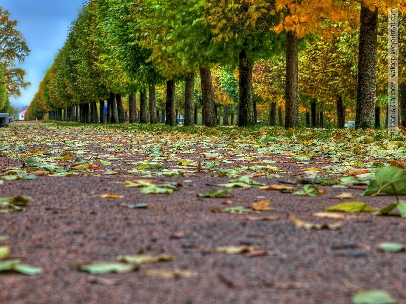 санкт-петербург, петергоф, russia, saint-petersburg, peterhof, россия, фото, photo, источник: http://valdep.livejournal.com