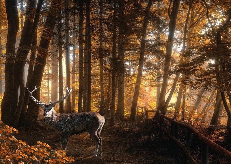 Олень в дремучем лесу (Photoshop)
